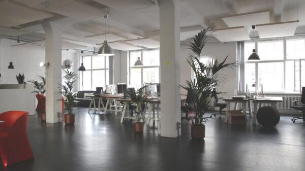 Jasne-biuro-z-zielenia